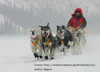 Dog Sled Team Vehicle Guardian