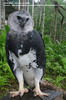 Harpy Eagle Vehicle Guardian