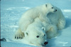 Polar Bear and Cub House Guardians